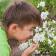 Stock Photo: Boy smells flowers on suburban
