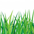 green grass on a white background — Stock Vector