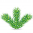 Spruce branches on a white background — Imagen vectorial