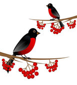 Branch tree with berry wild ash and bird bullfinch — Stock Vector
