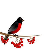 Branch with berry wild ash and bird bullfinch — Stock Vector