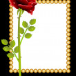 Red rose and greeting-card — Stock Vector #51333649