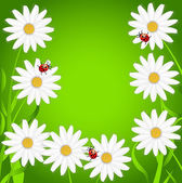 Background with the flowers of camomile and ladybirds — Vecteur