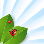 Background  with green leaves and ladybirds — Vecteur