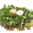 Two eggs — Stock Photo