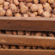 Potatoes for planting — Stock Photo