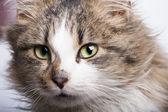 素敵な猫 — ストック写真