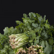 Bunches of green coriander — Stock Photo