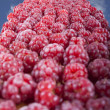 Picked raspberry — Stock Photo