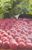Raspberry under sun light — Stock Photo