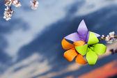 Sakura květiny — Stock fotografie