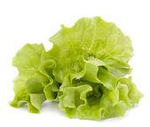 Färsk sallat salladsblad gäng — Stockfoto