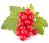 Porzeczki czerwone i zielone liście martwa — Zdjęcie stockowe