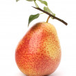 Stock Photo: Pear