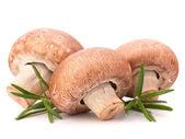 Brown champignon mushroom and rosemary leaves — Stock Photo