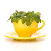 Herbal peppermint tea cup — Stock Photo