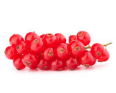 Red currants — Stockfoto