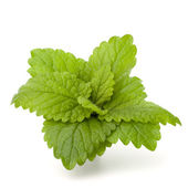 Peppermint or mint bunch — Stock Photo
