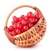 Red currants in basket — Stock Photo