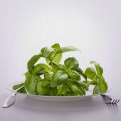 Sweet basil leaves on plate. — Stock Photo