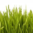 Grass silhouette — Stock Photo