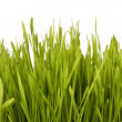 Royalty-Free Stock Photo: Grass silhouette