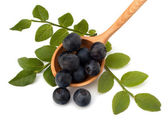 Blue bilberry or whortleberry — Stock Photo