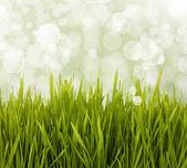 春デイジー フィールドです。イースター カード背景. — ストック写真