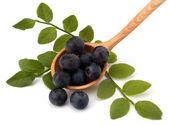 Błękitne jagody lub whortleberry — Zdjęcie stockowe