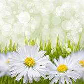 Spring daisy field. Easter card background. — Foto Stock