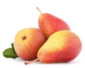Ripe pear fruit — Stock Photo