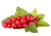 Rote Johannisbeeren und grüne Blätter-Still-Leben — Stockfoto