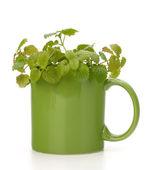 šálek čaje bylinné máta — Stock fotografie