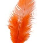 Orange feather isolated on white background cutout — Stock Photo #24894097