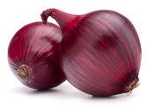 Bulbo de cebola vermelha — Foto Stock