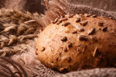 Loaf of bread and wheat ears still life — Stock Photo