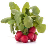 Small garden radish with leaves — Stock Photo