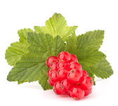 Red currants and green leaves still life — Stock Photo