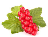 Red currants and green leaves — Stock Photo