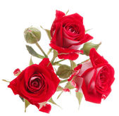 Red rose flower bouquet isolated on white background cutout — Stockfoto