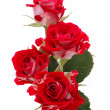 Stock Photo: Red rose flower bouquet isolated on white background cutout