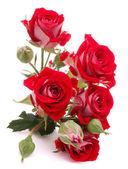 Rosa roja ramo de flores aisladas sobre fondo blanco recorte — Foto de Stock
