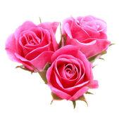 粉红玫瑰鲜花花束 — 图库照片