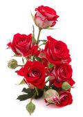 Röd ros blombukett — Stockfoto