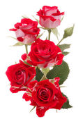 Red rose flower bouquet isolated on white background cutout — 图库照片