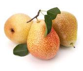 Frutos de pêra — Foto Stock