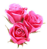 Pink rose flower bouquet isolated on white background cutout — Stock fotografie