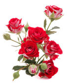 Red rose flower bouquet isolated on white background cutout — Foto Stock