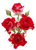 白い背景の切り欠きに分離された赤いバラの花の花束 — ストック写真