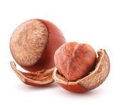 Hazelnut or filbert nut isolated on white background cutout — Stock Photo